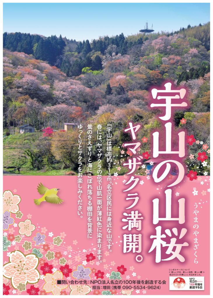 名立山桜のサムネイル
